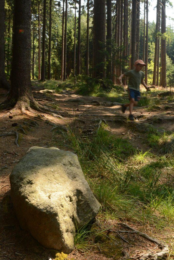 Lesní-cestičky