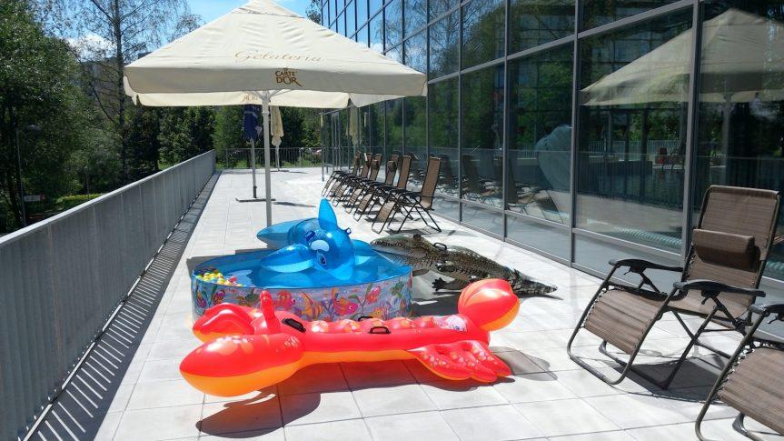 Letní terasa – Venkovní bazének – Zvířátka v akci!